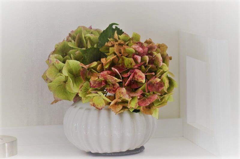 Flower -Friday mit Hortensien
