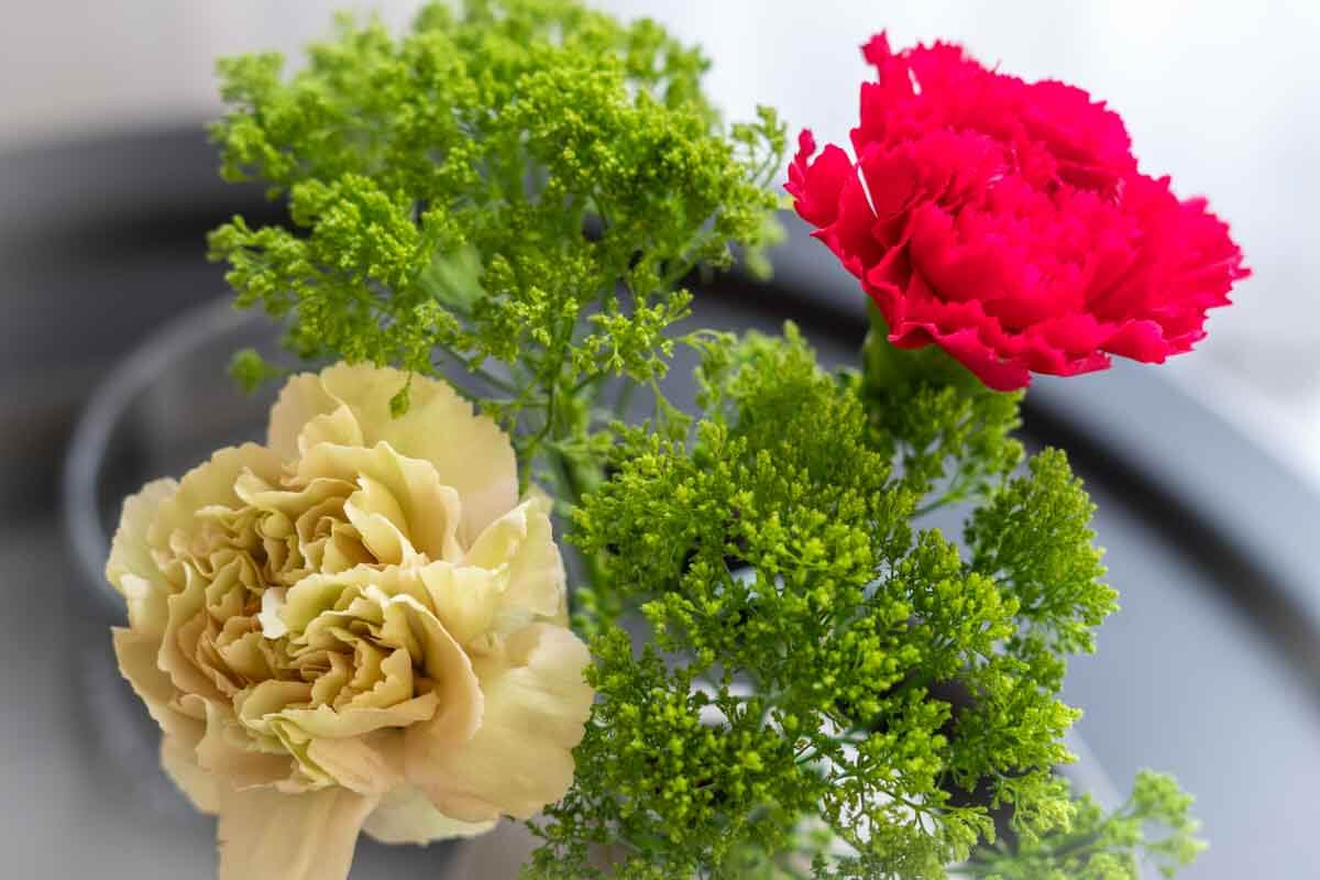 You are currently viewing Friday-Flowerday | Cremefarbene Nelken ?