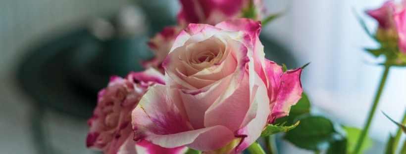 elke-elkeworks-Rosen-Friday-Flowerday